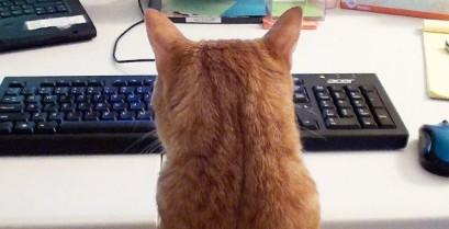Δουλεύοντας στον υπολογιστή παρέα με μια γάτα (Βίντεο)