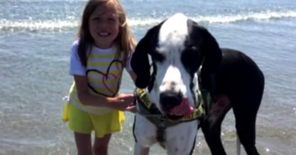Αυτή η 11χρονη δεν μπορεί να περπατήσει μόνη της. Δείτε τώρα τι κάνει ο σκύλος της! (Βίντεο)