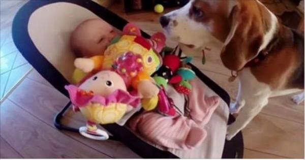 Αυτός ο σκυλάκος έκλεψε το παιχίδι του μωρού και τώρα ζητάει συγνώμη (Βίντεο)