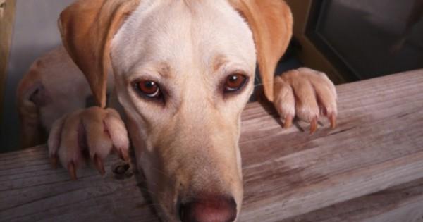 Πώς συνδέεται η κακοποίηση ζώων με τους serial killers