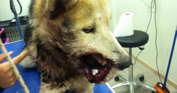 Έσωσαν σκύλο πυροβολημένο εξ επαφής στο κεφάλι (Εικόνες)
