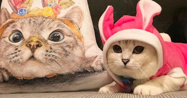 21 ζωάκια που είναι σταρ του Instagram! (Εικόνες)
