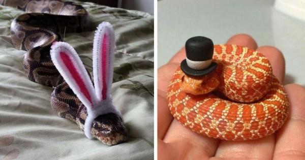 Φοβάστε τα φίδια; Αν τα δείτε να φοράνε καπέλα θα αλλάξετε γνώμη. (Εικόνες)