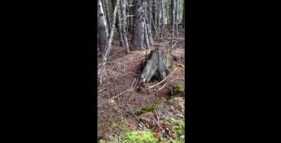 Το δάσος που αναπνέει (Βίντεο)