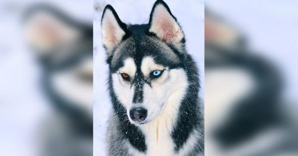 Θα μείνετε με το στόμα ανοιχτό κοιτάζοντας τα μάτια αυτών των 10 σκύλων! (Εικόνες)