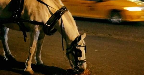 Πιστεύευτε ότι η βόλτα με άλογο είναι ρομαντική… Δείτε όμως την σκληρή αλήθεια! (Εικόνες)