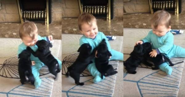 Δύο γλυκύτατα κουτάβια βλέπουν για πρώτη φορά στη ζωή τους μωρό. Η αντίδρασή τους, θα σας κάνει να λιώσετε. (Εικόνες)