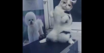 Η γάτα που χορεύει Trance (Βίντεο)