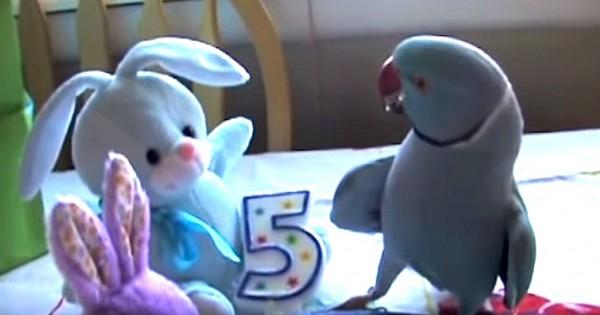 Το απίθανο πάρτι γενεθλίων του Marny του παπαγάλου (Βίντεο)