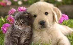 Τι πρέπει να κάνετε αν σας δαγκώσει σκύλος ή γάτα;