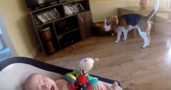 Το μωρό άρχισε να κλαίει, όταν ο σκύλος του πήρε τα παιχνίδια – Όμως επανορθώνει… [βίντεο]