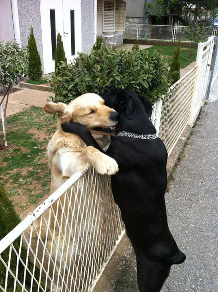 σκυλιά