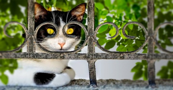 20 φωτογραφίες από γάτες, που τραβήχτηκαν ακριβώς την κατάλληλη στιγμή. (Εικόνες)