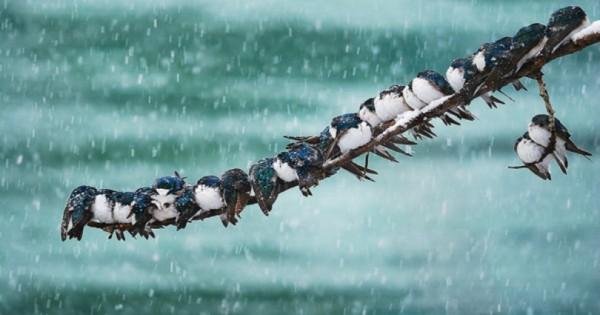 Ζώα ποζάρουν σε χειμωνιάτικα τοπία! (Εικόνες)