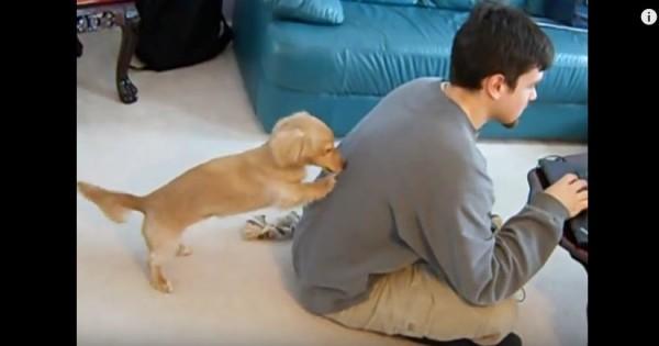 Δείτε τι κάνει αυτός ο σκύλος για να τραβήξει την προσοχή του αφεντικού του (Βίντεο)