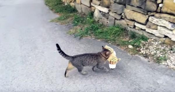 Το γατί και το τιγρόνι (Βίντεο)