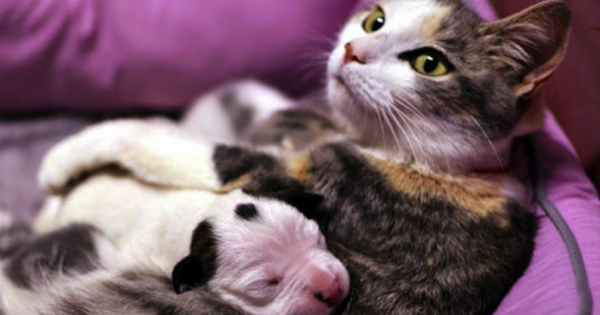 Αυτό το νεογέννητο κουτάβι ήταν έτοιμο να πεθαίνει. Δείτε τότε, τι έκανε αυτή η γάτα.