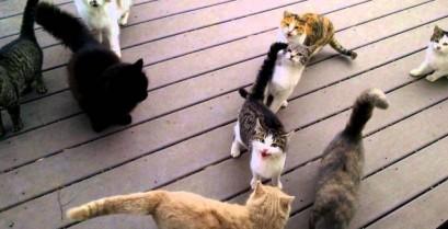 Το πεινασμένο κοπάδι (Βίντεο)