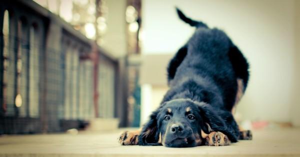 20 αλήθειες που δεν πρέπει να ξεχνάμε όσοι αγαπάμε τα σκυλιά! Μαθήματα ζωής…