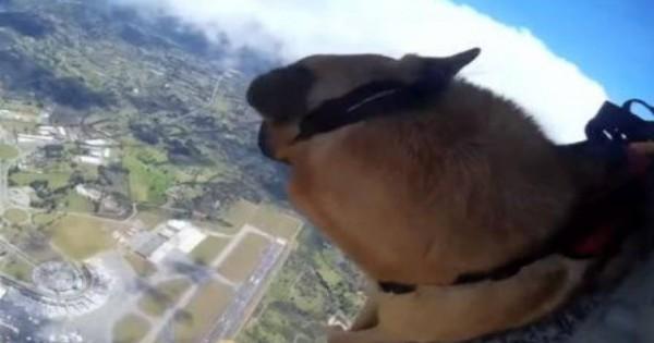 Οι σκύλοι των ειδικών δυνάμεων της Κολομβίας εκπαιδεύονται με τους …αλεξιπτωτιστές [βίντεο]