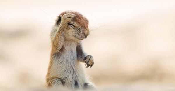 Οι πιο αστείες φωτογραφίες ζώων για το 2015 (Εικόνες)