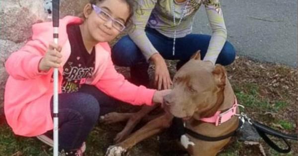 Ιστορία αγάπης: 2 κοριτσάκια με ειδικές ανάγκες υιοθέτησαν ένα pitbull με κινητικά προβλήματα! (Βίντεο)
