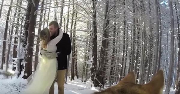 Χιονισμένος γάμος από την οπτική του σκύλου του ζευγαριού (Video)