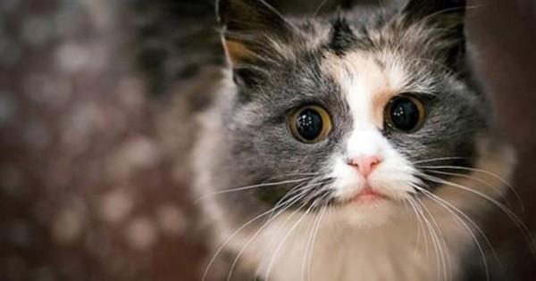 Γάτες υποδέχονται τους ιδιοκτήτες τους μετά από πολύ καιρό! (Βίντεο)