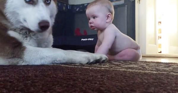 Η αντίδραση του Σκύλου στο χαιρετισμό του μωρού, θα σας κάνει να λιώσετε. (Εικόνες)