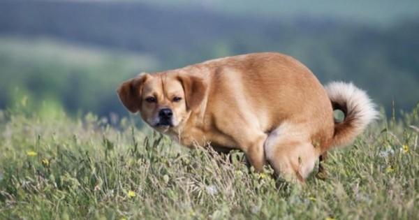 Δείτε γιατί μας κοιτούν τα σκυλιά όταν κάνουν την ανάγκη τους.