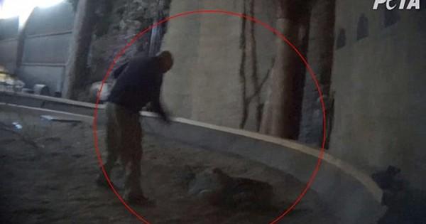 Καταξιωμένος «εκπαιδευτής ζώων» καταγράφηκε να μαστιγώνει νεαρή τίγρη! (Βίντεο)