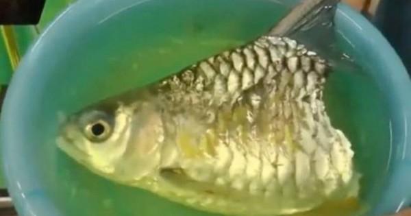 Απίστευτο: Ψάρι ζούσε κομμένο στα… δύο! (video+photos)