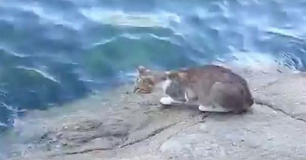 Γάτα ψαρεύει κατευθείαν από την θάλασσα! (Βίντεο)