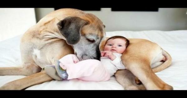 Ζωάκια συναντάνε για πρώτη φορά μωράκια ! (Βίντεο)
