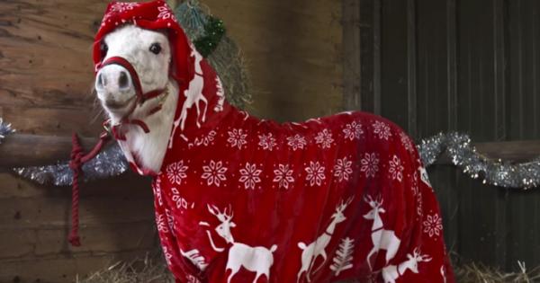 Το «χριστουγεννιάτικο» πόνυ που θα σας φτιάξει τη διάθεση! (Βίντεο)