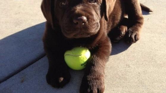 19 λόγοι για να είστε ευγνώμονες για το σκυλί σας (Εικόνες)