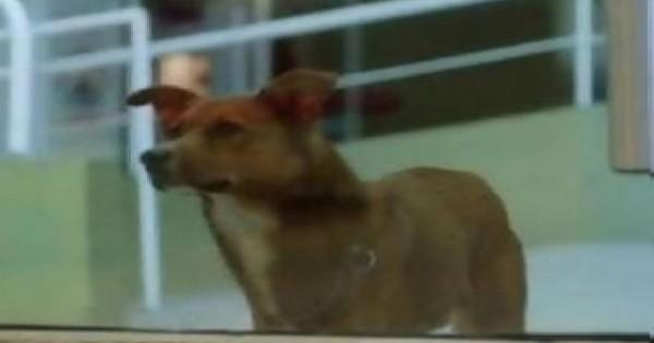 Σκύλος μύρισε την καρδιά του αφεντικού του σε ξένο σώμα – Δείτε την αντίδρασή του… (vid)
