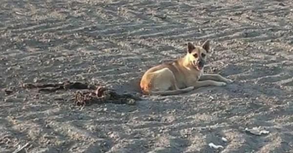 Ήταν ξαπλωμένη δίπλα στο κόκαλα του νεκρού της φίλου αλλά η κατάληξη της ήταν τελικά απρόσμενη… (Βίντεο)