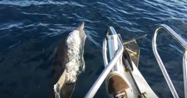 Ήλπιζαν να δουν ένα δελφίνι, όμως, αυτό που είδαν τελικά ξεπέρασε κάθε προσδοκία τους! (Βίντεο)
