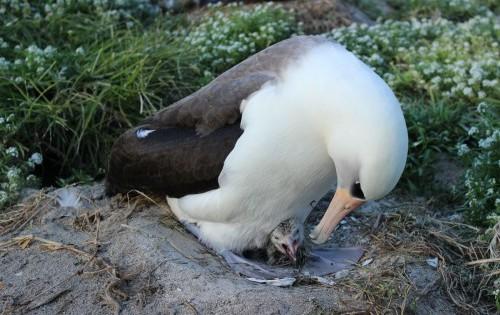 Το μεγαλύτερο σε ηλικία πουλί του κόσμου είναι 67 ετών και γεννά ακόμη αυγά (Εικόνες)