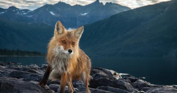 Φωτογραφίζοντας ζώα εκεί που δεν το περιμένουν (Εικόνες)
