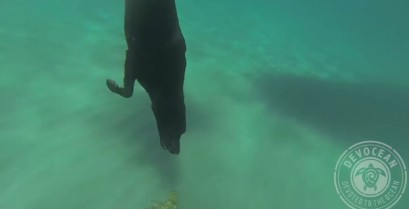 Ο σκύλος που κάνει καταδύσεις (Βίντεο)
