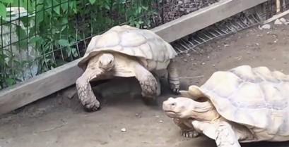 Βοήθεια από ένα φίλο (Βίντεο)