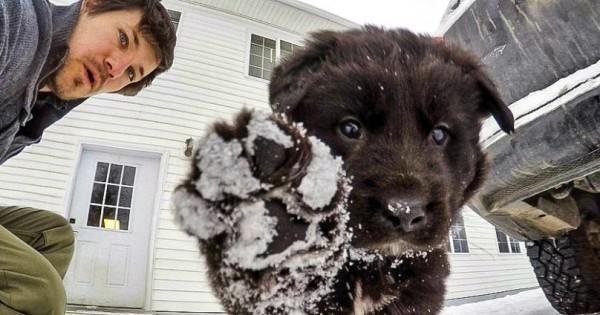O Άνδρας που κατέκτησε το διαδίκτυο με απερίγραπτα χαριτωμένα σκυλάκια του (Εικόνες)