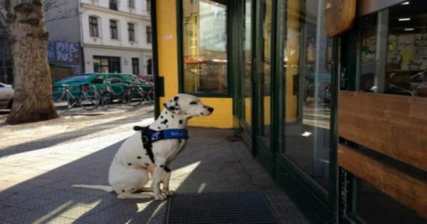 Τα σκυλιά που περιμένουν υπομονετικά (Εικόνες)