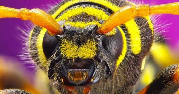 Δείτε τα 10 πιο επικίνδυνα έντομα στον κόσμο και προφυλαχθείτε! (ΒΙΝΤΕΟ)