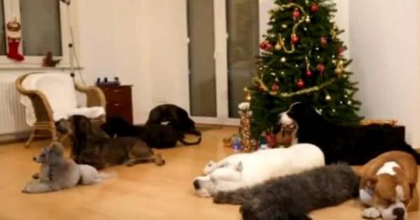 Αυτά τα σκυλιά περιμένουν να κλείσει η πόρτα και μετά… [βίντεο]