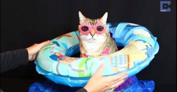Αυτό είναι το αληθινό… Catwalk: Η γάτα που ποζάρει για φωτογραφίσεις σαν σούπερ μόντελ (vid)