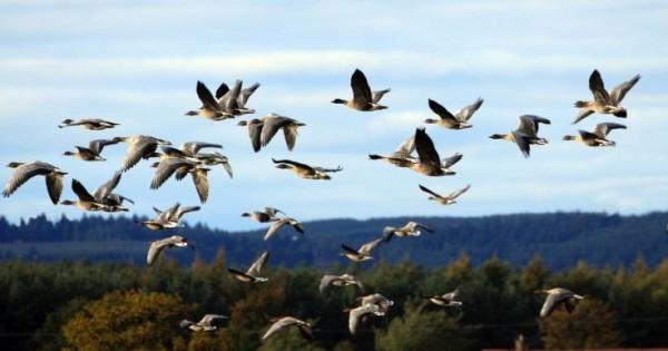 Κινδυνεύουν στα ταξίδια τους τα μεταναστευτικά πουλιά