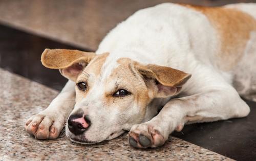 Βοήθησε και εσύ τα αδέσποτα σκυλιά της γειτονιάς σου